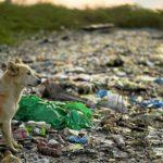 Chien au milieu de plastiques