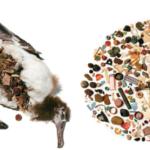 Déchets plastiques retrouvés dans un oiseau marin